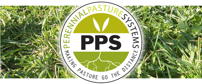 Perennial Pasture Systems